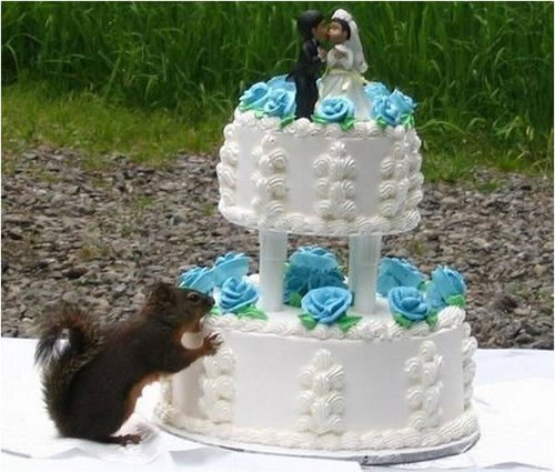 SQUIRRELS WEDDING